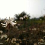 Yureka Flower